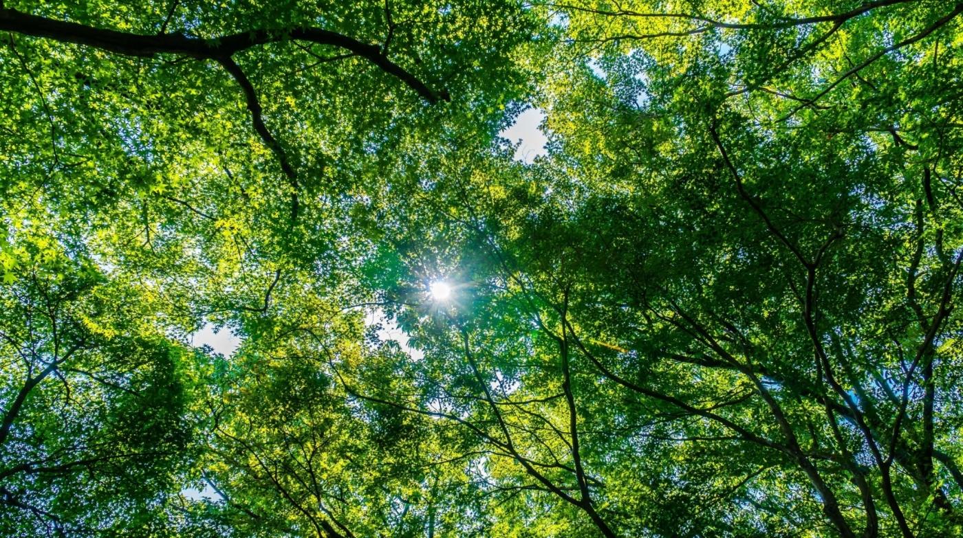 trees-min-crop
